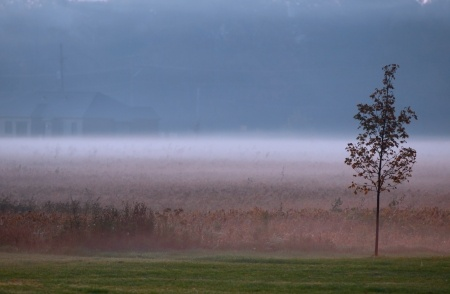 early_morning_fog_in_the_farm_450